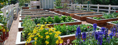 Harvest at Damonte Ranch: Apartment Sustainability as an Asset